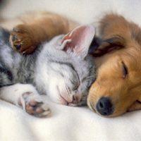Kada je najbolje vrijeme za spavanje ?